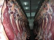 Омск Постоянная поставка свежего  мяса