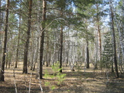 продам земельный участок 47 соток п.Чернолучье