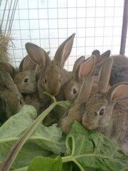 Продаю кроликов в Омске