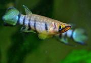 Аквариумные рыбки и водные растения