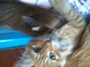 красавица кошечка ищет себе дом ей 2 месяца