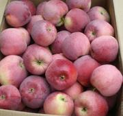 Предлагаем молдавское яблоко более 15-ти сортов