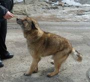 Табби ищет любящего хозяина и дом,  который можно охранять!