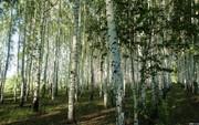 продам земельный участок п.Новотроицкое Омского района