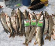 FishHungry - зимняя рыбалка